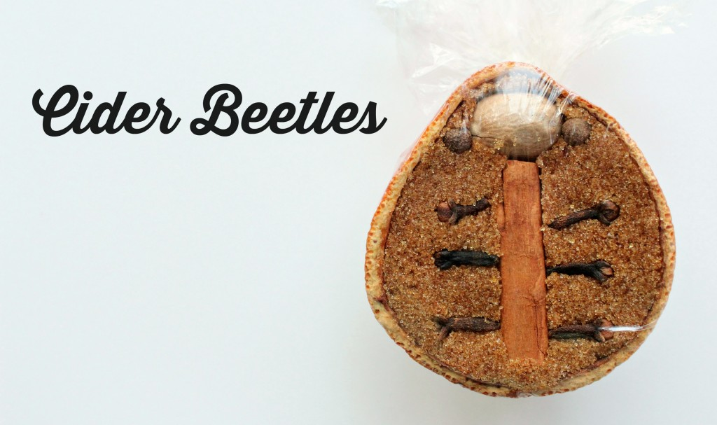 cider beetles